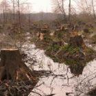 نقش سپاه در نابودی محیط زیست، جنگلها و مراتع کشور